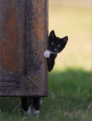猫は見た2.jpg