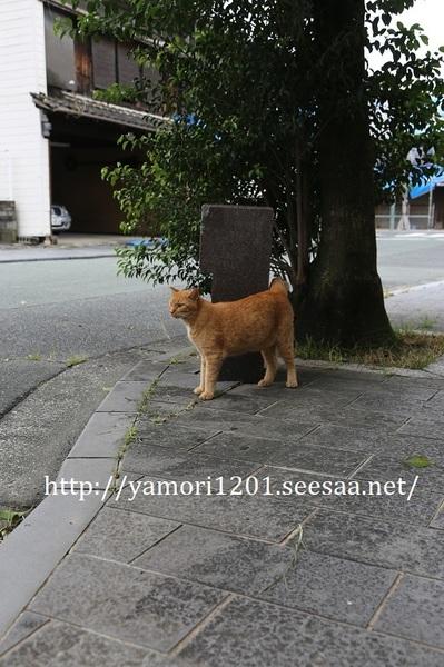 IMG_6070.JPG