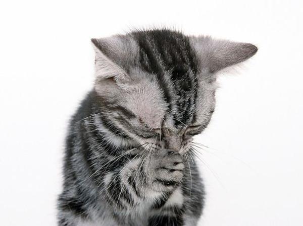 2お願い猫.jpg