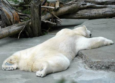 だらーん熊2.jpg