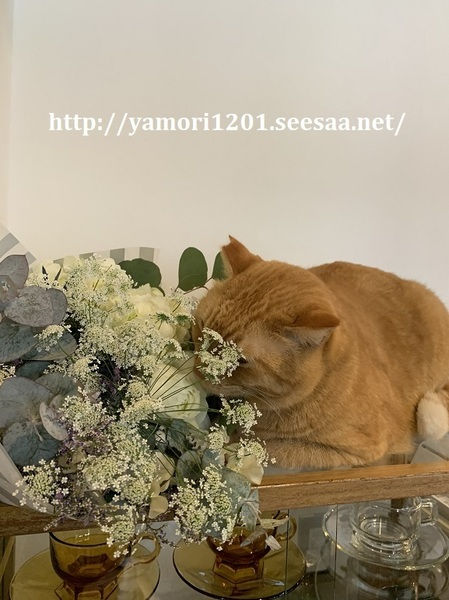 ぶーと花束1.jpg