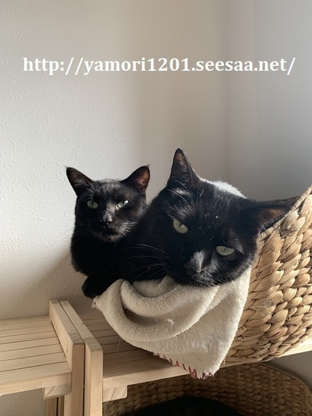 家猫2.jpg