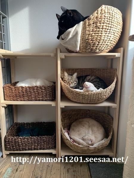家猫3.jpg