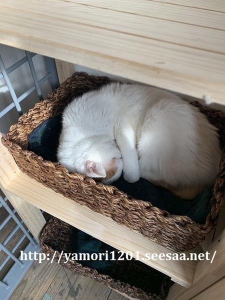 家猫5.jpg