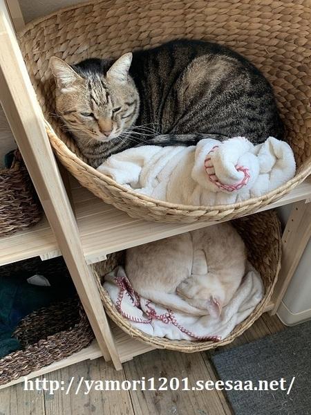 家猫6.jpg