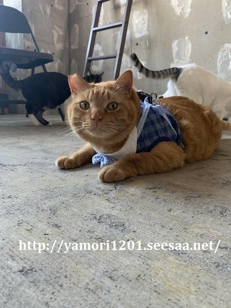 店猫ぶー3.jpg