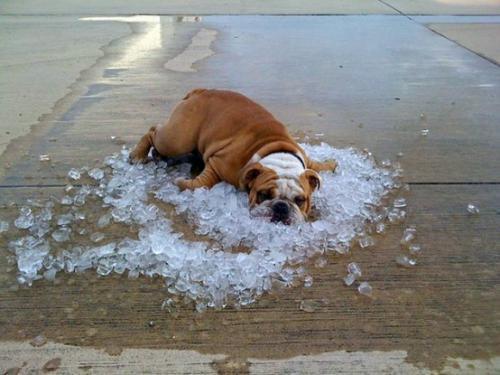 暑い犬.jpg