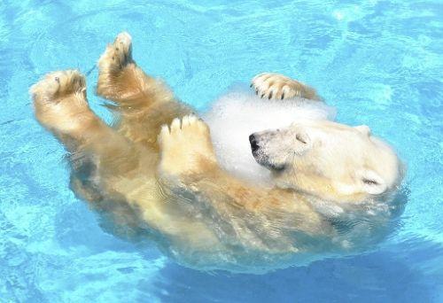 氷抱っこシロクマ.jpg