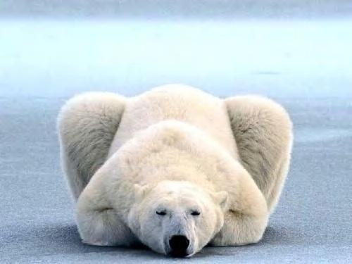 白熊べたーーっ.jpg
