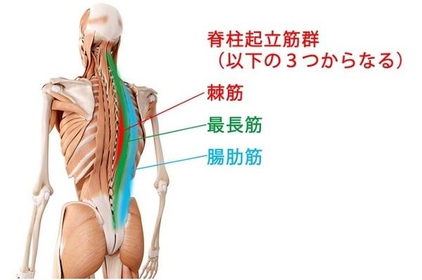 脊柱起立筋群.jpg
