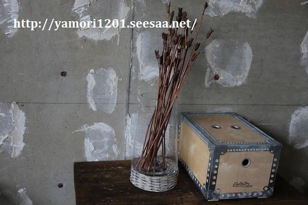 IMG_6899.JPG